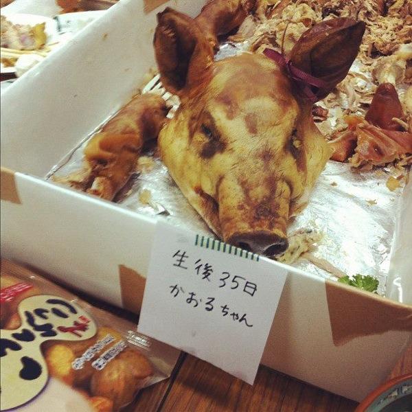 沖縄の豚の丸焼き 生後35日 かおるちゃん