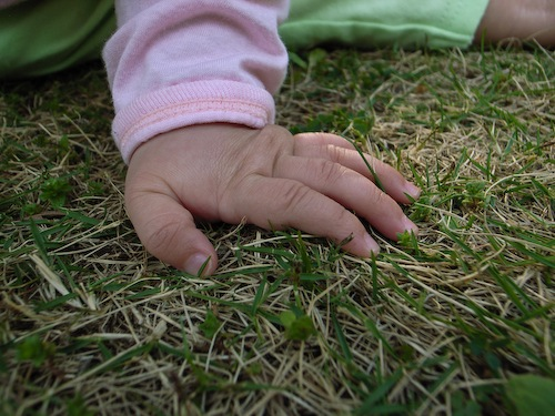 リコタマ芝生2